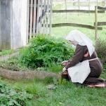 Kräuter ernten im Garten